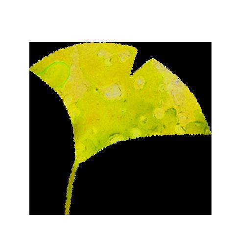 【無料素材】いちょうの葉のイラスト