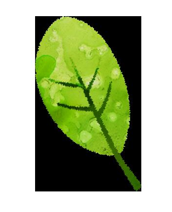 【無料素材】緑の葉っぱのイラスト