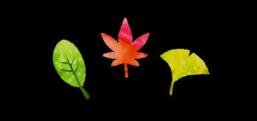 紅葉、銀杏、落葉樹のイラスト