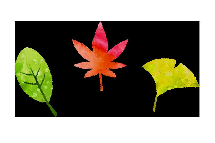 【無料素材】秋の葉のイラスト