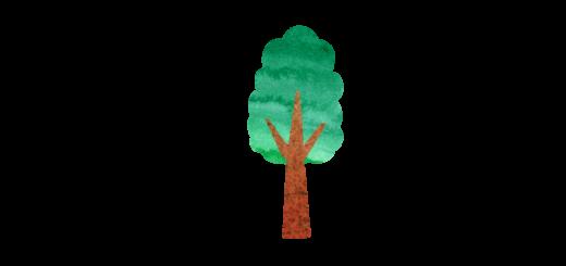 背の高い細い木のイラスト