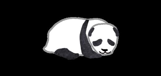 こちらを見ているパンダの赤ちゃんのイラスト