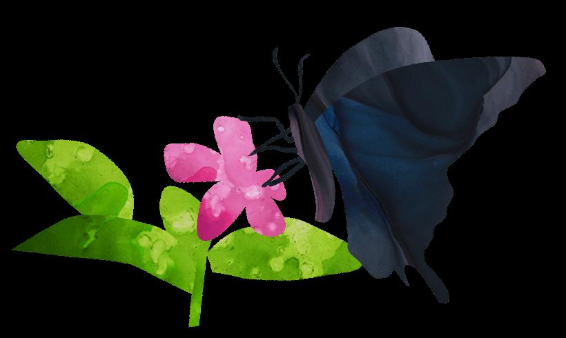【無料素材】花の蜜を吸う黒い蝶のイラスト