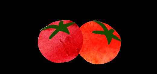 トマト2つのイラスト
